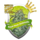 ROYAL HAZE AUTOMATIC * ROYAL QUEEN SEEDS  AUTO