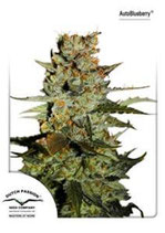 AUTOBLUEBERRY AUTOFEM ® * DUTCH PASSION FEM