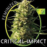 CRITICAL IMPACT* VISION SEEDS  FEM