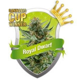 ROYAL DWARF * ROYAL QUEEN SEEDS AUTO