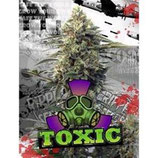 TOXIC * RIPPER SEEDS  FEM