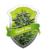 QUICK ONE * ROYAL QUEEN SEEDS  AUTO