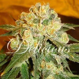 MARMALATE * DELICIOUS SEEDS INDICA FEM