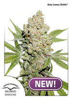 AUTO LEMON ZKITTLE ® * DUTCH PASSION FEM