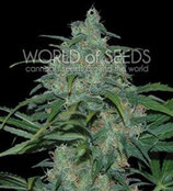 WILD THAILAND * WORLD OF SEEDS FEM