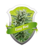 EASY BUD * ROYAL QUEEN SEEDS  AUTO