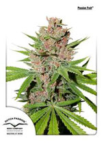 PASSION FRUIT * DUTCH PASSION FEMINIZED