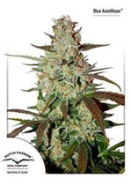 BLUE AUTOMAZAR® * DUTCH PASSION FEMINIZED
