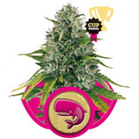ROYAL MOBY - ROYAL QUEEN SEEDS - FEMMINIZZATA