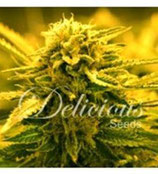 SUGAR BLACK ROSE AUTO* DELICIOUS SEEDS INDICA  FEM
