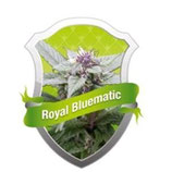 ROYAL BLUEMATIC * ROYAL QUEEN SEEDS AUTO