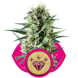 SPECIAL KUSH 1 - ROYAL QUEEN SEEDS - FEMMINIZZATA