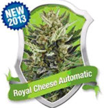 ROYAL CHEESE AUTOMATIC * ROYAL QUEEN SEEDS  AUTO
