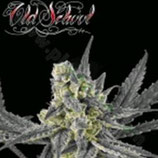 OLD SCHOOL * RIPPER SEEDS  FEM