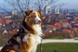 BARFplan *Adult* (gesunder Hund)