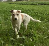 BARFplan *Senior* (alter Hund)