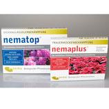 Steinernema feltiae gegen Trauermücken