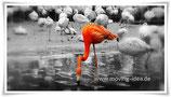 """Maxi-Postkarte """"Flamingos"""""""