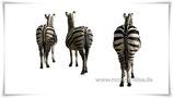 "Maxi-Postkarte ""Zebras"""