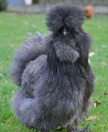 Oeufs poule Soie Bleu & Noir (GR)