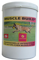 Muscle Build Dog