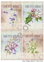 PA4-151 Los flores