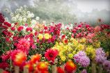 Garden = als Ritu*ls
