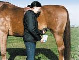 HK-Trächtigkeitsdiagnosegerät für Pferde (KERBL)