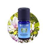 Magnolienblätter - 5 ml