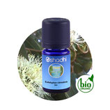 Eukalyptus citriodora BIO - 5 ml