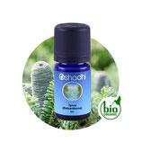 Tanne (Balsamtanne) BIO - 5 ml