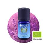 Lavendel herb (Lavandin grosso) BIO - 5 ml