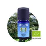 Zedernholz (Atlaszeder) BIO - 5 ml