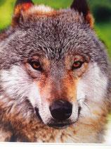 Der Wolf 100ml