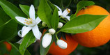 Neroli ÖL - Orangenblüte