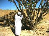 dunkles Weihrauchöl aus dem Norden Afrikas