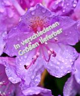 Blumen im Regen auf Leinwand