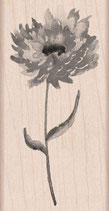 Hero Arts Woodblock Stamps: Puff Flower H5903