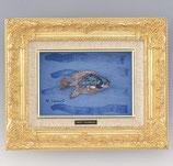 25-59 魚シリーズ 寿(富永直樹)