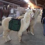 Alpaka und Lama- Packsattel
