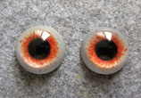Wendehals Auge