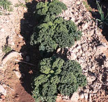 Col Kale (€/unitat)