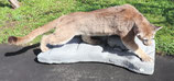 Puma Pumapräparat Berglöwe