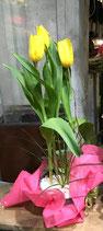 Planta Tulipán FRENCH TP106