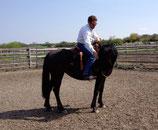 4 Wochen Pferdetraining pro Pferd