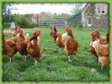 Oeufs (poules de plein air)