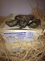 Bourriche d'huîtres   3kg