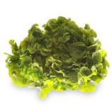 Salade fraîche à l'unité