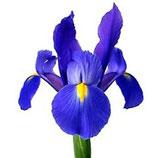 Naturduft Iris