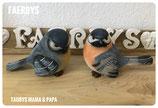 Vogel Taubsy Eltern